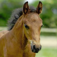 Jak zrozumieć konia?