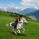 Jak sobie poradzić, kiedy koń poniesie?