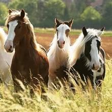 Co warto wiedzieć o hodowli koni?