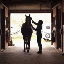 Czyszczenie konia – podstawowe zasady