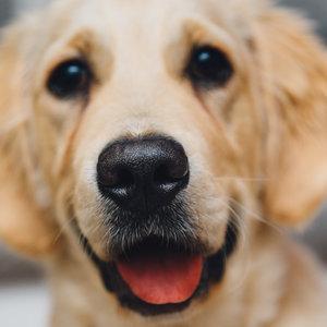 Podstawowe zasady odrobaczania psa