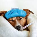 Jak ocenić stan zdrowia psa?