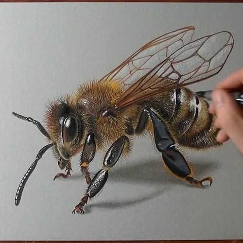 Zasady rysowania prostej pszczoły