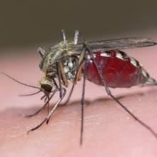 Sprawdzone preparaty do oprysku na komary