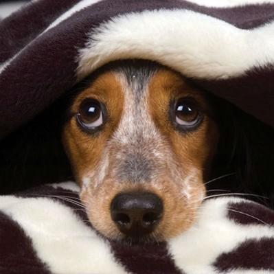 Co zrobić, gdy pies boi się burzy?