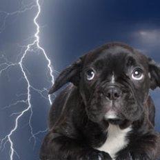 Jak pokonać strach psa przed burzą – sposób drugi