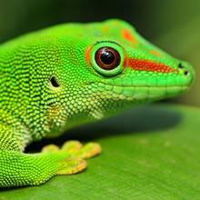 Żywienie gekona – podstawowe zasady