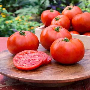 Pielęgnacja pomidorów
