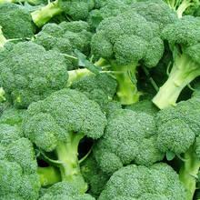 Jak uprawiać brokuły?