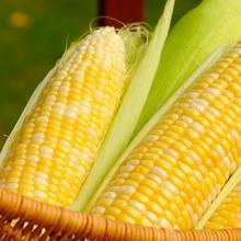 Jak ugotować kukurydzę, żeby była miękka?