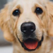 Jak poradzić sobie z psem, który wszystko gryzie?