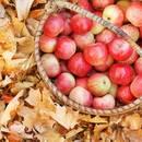 Jak przygotować girlandę z jabłek?