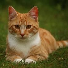 Jak szybko zorientować się, że kot ma robaki?