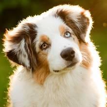 Zasady leczenia anemii u psa