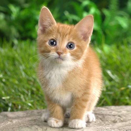 Jak poprawnie obciąć kotu pazury?