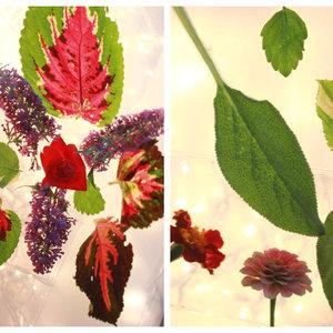 Jak zrobić ładne motyle z liści?