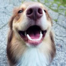 Jak dobrze dbać o zęby psa?