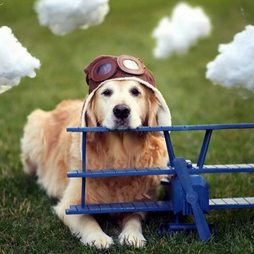 Przewożenie psa samolotem – podstawowe zasady