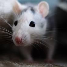 Opieka nad myszkami – podstawowe zasady