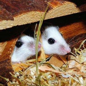 Klatka dla myszek