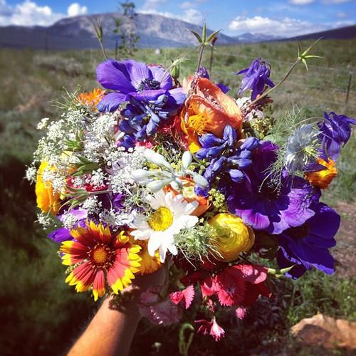 Jak przygotować bukiet z polnych kwiatów?