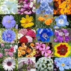 Bukiet z polnych kwiatów – krok pierwszy