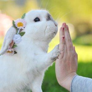 Jak się porozumieć z królikiem?
