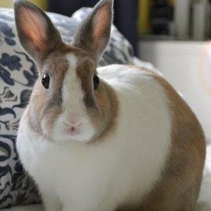 Gdy królik jest zestresowany