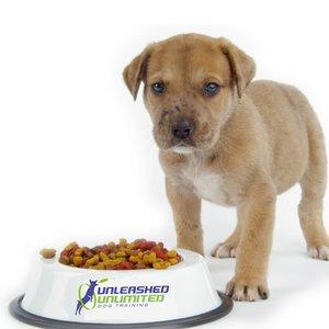 Prawidłowe żywienie psa