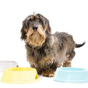 Prawidłowe żywienie psa – zasada pierwsza