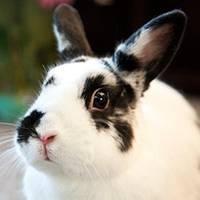 Jak się zajmować królikiem miniaturką?
