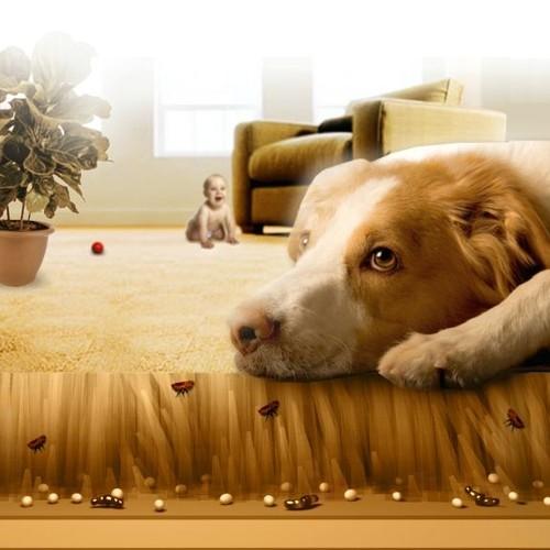 Co robić, gdy pies ma pchły?