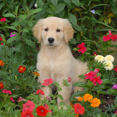 Jak nauczyć psa, by nie niszczył ogrodu?