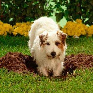 Chroń swój trawnik